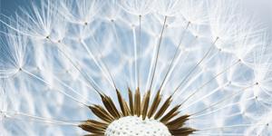 Kapitalschutz-Zertifikat mit Digital Plus Beteiligung auf Fixed-Income Uneingeschränkter Fonds